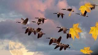 Золотая осень Мои переходы и эффекты Бабье лето