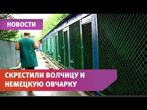 Щенки Померанского шпица продажа от питомника ДогОк