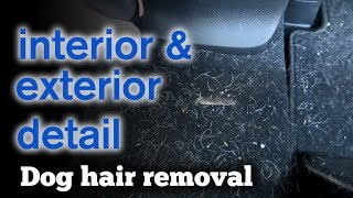 Interior and Exterior Detail // Dog Hair Removal // Detailer Cord Snaps