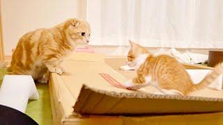 威嚇し合っていた先住猫と新入り猫の距離が縮まってきた様子