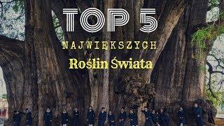 TOP 5 Największych roślin świata