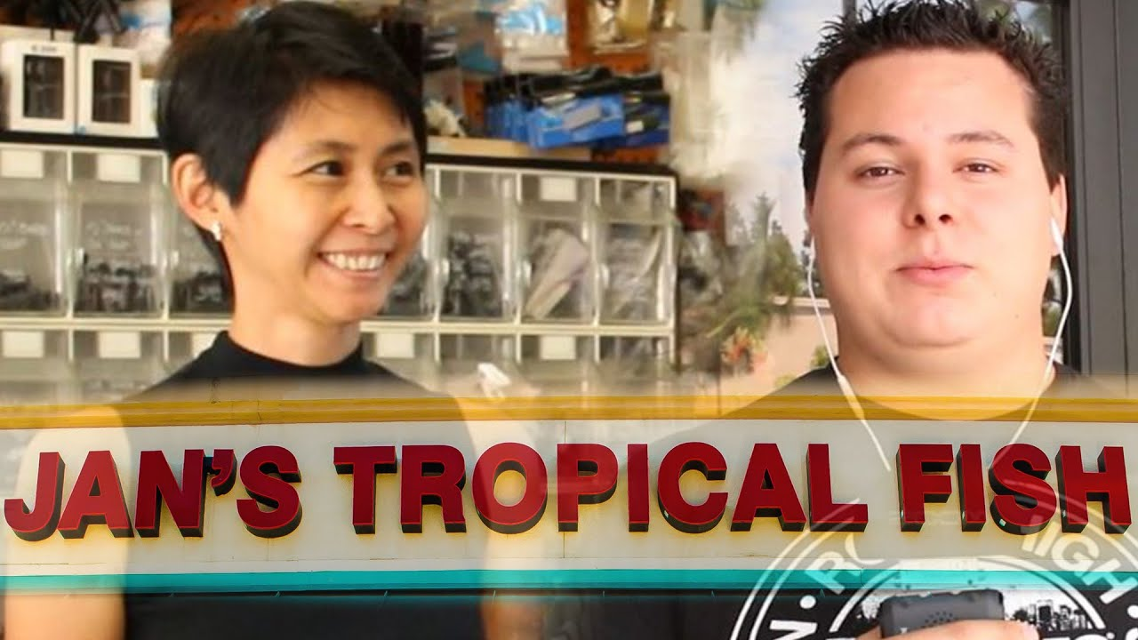 Tropical fish store tours jan 39 s tropical fish youtube for Jans tropical fish