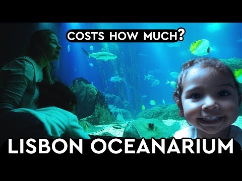 Lisbon Oceanarium How Much Does It Cost? Family Of 4 Day Out