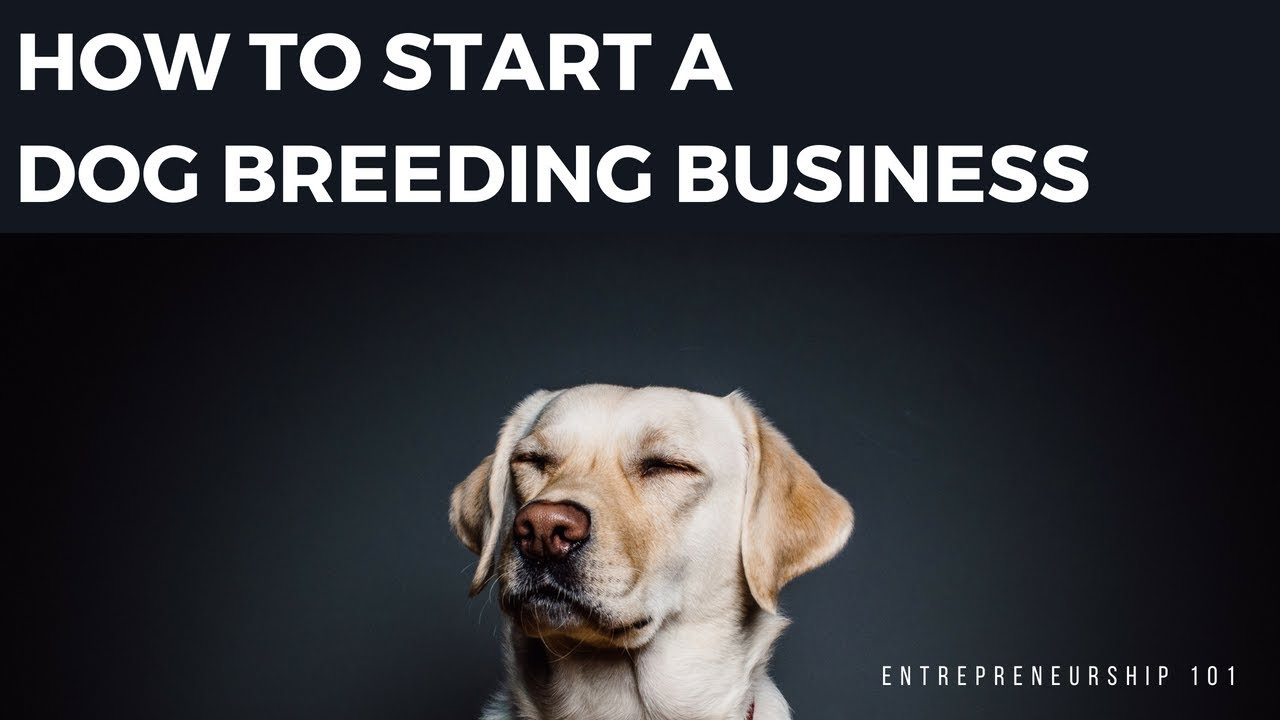 How To Start A Dog Breeding Business From Home - How To Start Breeding Your  Dog