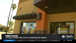 Taco Bell Offers Free Taco On Tuesday