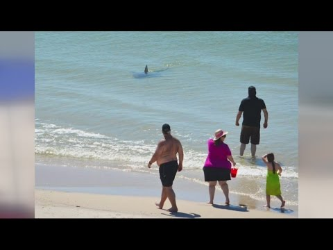 Shark Scare At Gulf Shores
