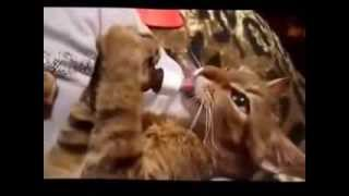 Смешные кошки 2014 часть 11