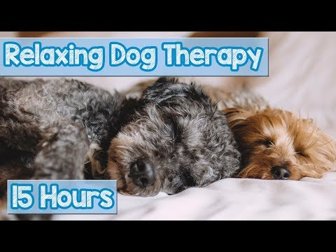 NEW, IMPROVED Relaxing Music for Dogs! Calm Your Energetic D