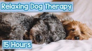 NEW, IMPROVED Relaxing Music for Dogs! Calm Your Energetic Dog with this Soothing Music (2018)