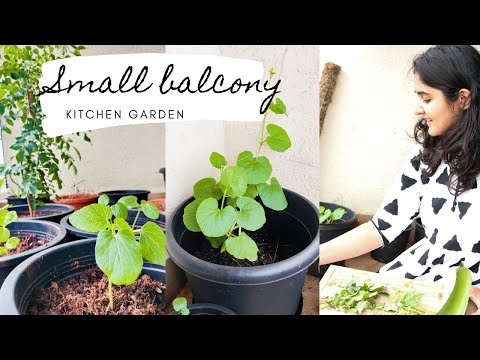 Small Balcony Garden: Vegetables you must grow