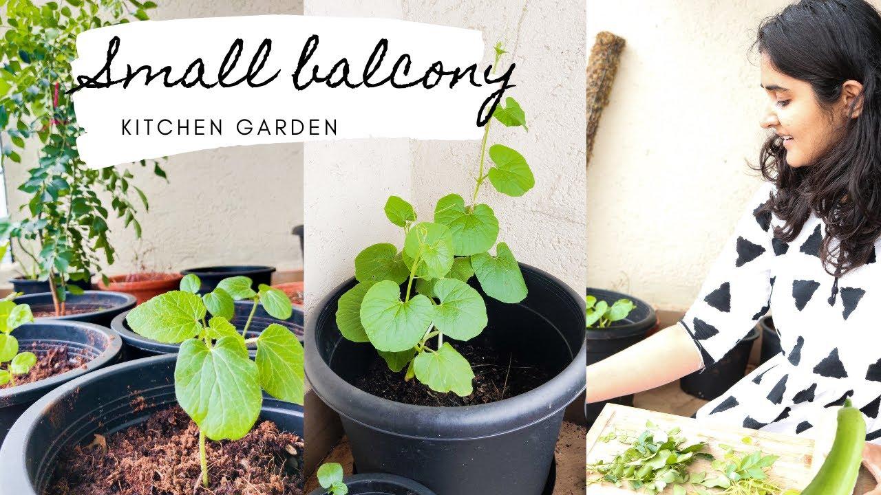 Small Balcony Garden: Vegetables You Must Grow - YouTube