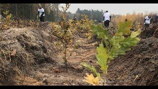 #teamtrees znaczy sadzenie drzew