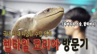 국내 최대 파충류 수입업체 렙타일 코리아 방문기(fea…