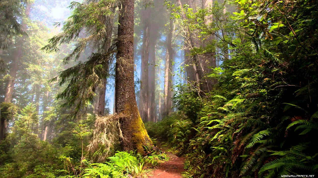 Pretty Wallpapers For Fall 5 World Natural Forest Youtube
