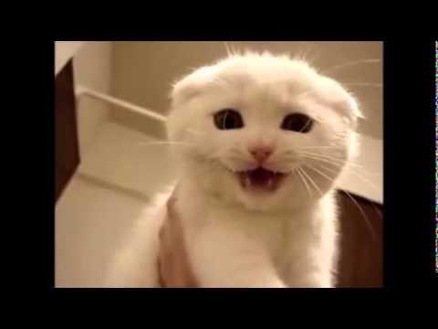 Yavru Kedi Sesi Miyav Miau2 Bol Tekrarli