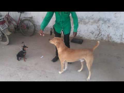 street dog obedience training.