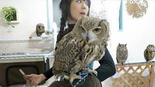 Little Girl vs. GIANT OWL, at Japan's Owl Cafe!