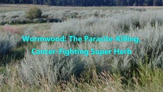 Wormwood The Parasite Killing, Cancer Fighting Super Herb