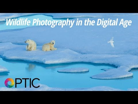Optic 2016: Wildlife Photography in the Digital Age with Ralph Lee Hopkins