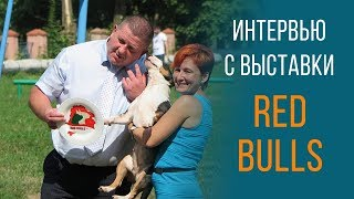 О выставке собак породы бультерьер стандарт и мини Red Bulls