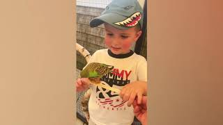 Funniest Baby and Baby Animals Fails