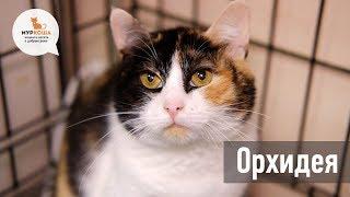 """Кошка Орхидея, жертва необъяснимой жестокости, в поисках дома (приют """"Муркоша"""")"""