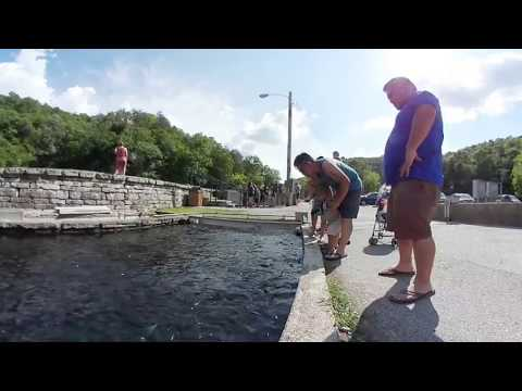 Hmong: Roaring River Fish Hatchery In Missouri - 360 Degree Video
