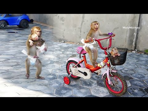 Wowo Very Amazinq Donal Take CC Walk Follow Mum To Ride Bicycle, Donal Can Carry CC On Bicycle thumbnail
