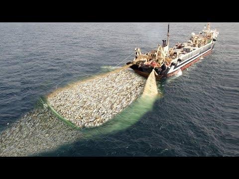 WoW !! Fishing Boat Catch a Lot of Fish - Big Catch !