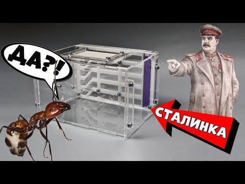 Как переселить упрямых муравьёв в ферму