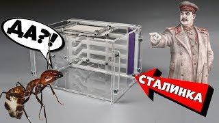 видео Как начать уничтожение домашних муравьев