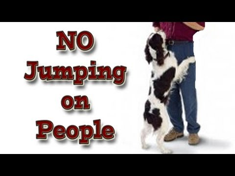 'How to' teach your dog not to jump up on people! - clicker training