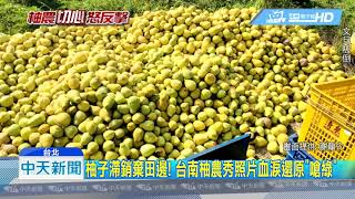 20190313中天新聞 台南柚農心血被迫「棄」 謝龍介哽咽轟綠:都沒人理