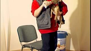 Дрессировка собак дома с нуля - как отучить собаку рычать?