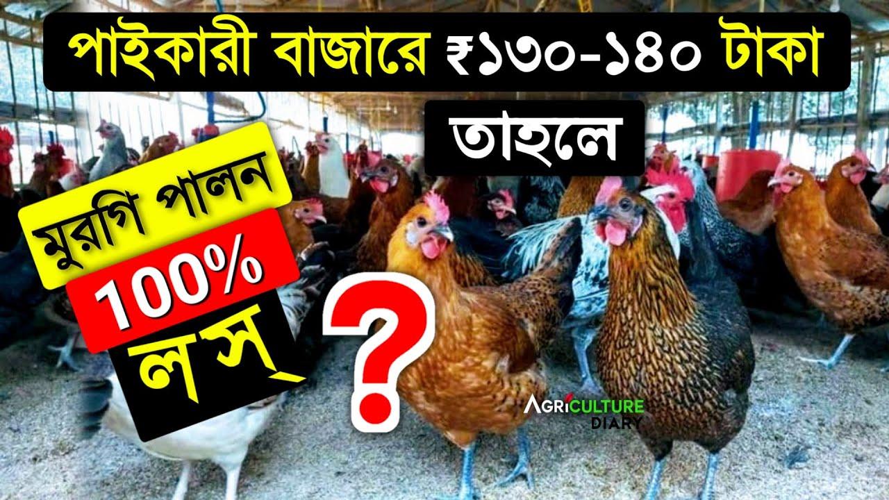 সাবধান ! তাহলে মুরগি পালন কি 100% লস 🙄 | Desi Murgi Poultry Farm | Chicken farming
