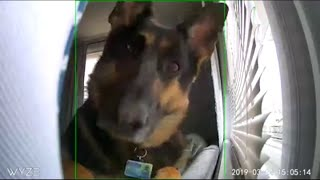 Video: Dog captured being cute on camera