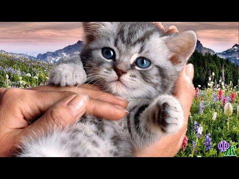 Вопрос: Запоминают ли котята друг друга в детстве, если да, сколько помнят?