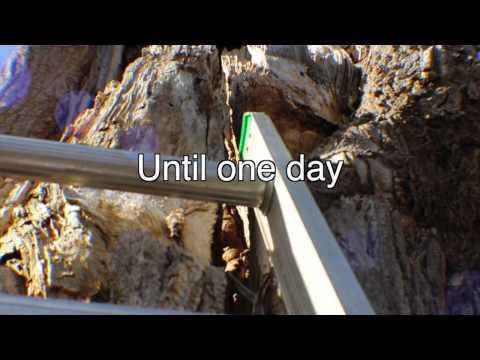 Annabel's Tree Of Life Trailer