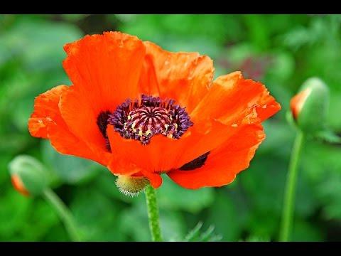Язык цветов или какой цветок что означает
