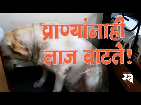 Dog's guilty feeling | Animals also have emotions