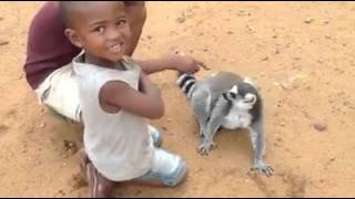 Лемур требует от детей чесать ему спину. Мадагаскар