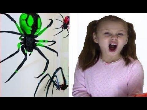 Kinderlieder Und Lernfarben with SPIDER