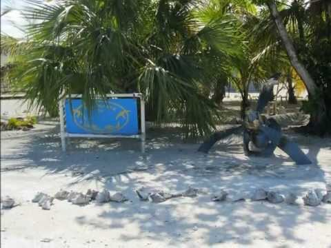 South Bimini Bahamas Sands To Beach Club