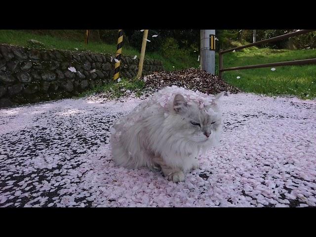 石根ふれあい公園 桜の花びら
