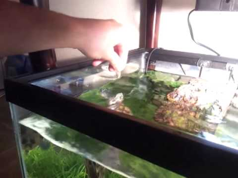 My 40 gallon Red eared slider tank YouTube