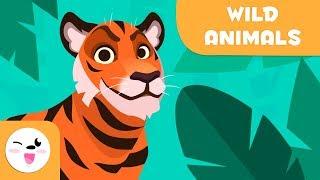 Wild animals for kids - Vocabulary for kids