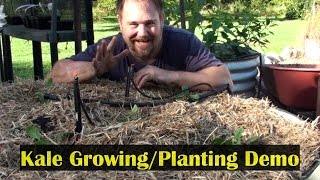 Growing Kale Planting Demo in a Raised Garden Bed