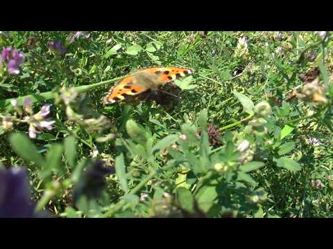 Бабочки - порхающие феи!!