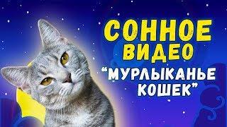 ВИДЕО ДЛЯ ЗАСЫПАНИЯ - кошачье мурлыканье