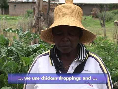 OVC Livelihoods Project -The Mafeteng Experience